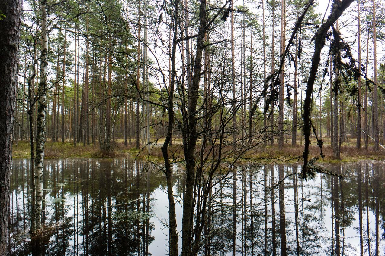 najwieksze-atrakcje-estonii-park-narodowy-lahemaa